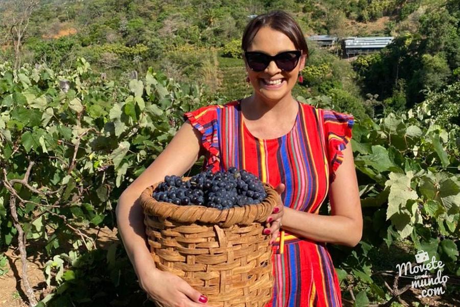 Entre uvas y vinos en Costa Rica